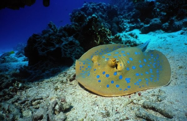 Amazing Beauty of Sea Life: Real Beauty Of Sea Life