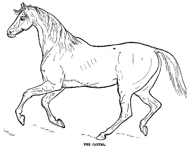 Desenhos Para Colorir Cavalo De Fogo