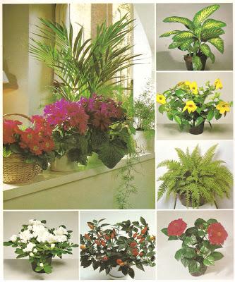 Surprising Success With House Plants Interior Design Ideas Clesiryabchikinfo