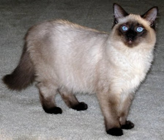 February 2010 Cat Breeds
