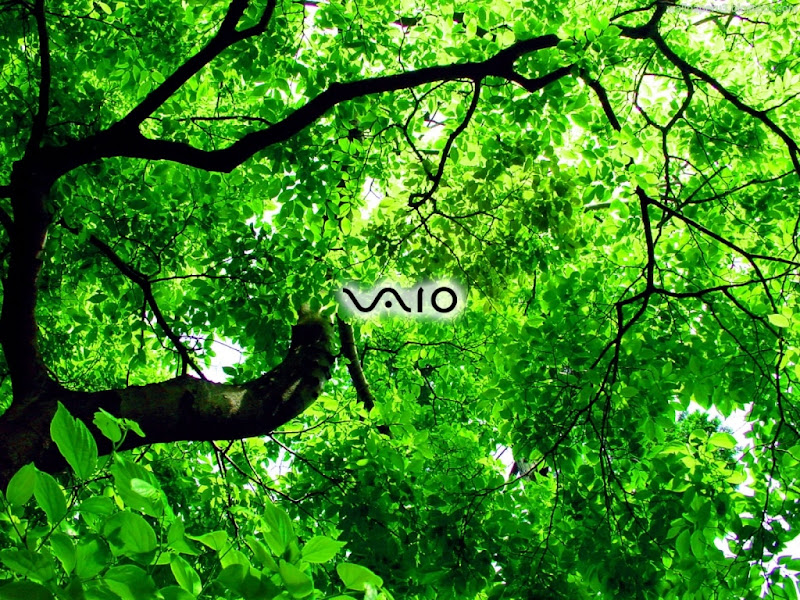 Sony VAIO Widescreen Wallpaper 13
