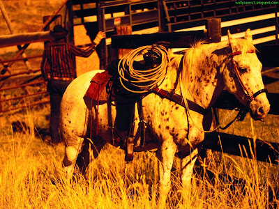 Horse Standard Resolution Wallpaper 71