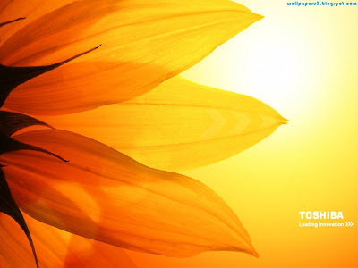 Toshiba Standard Resolution Wallpaper 6