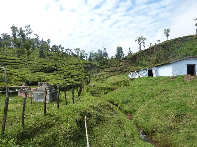 House at Tea Gardens - Ooty