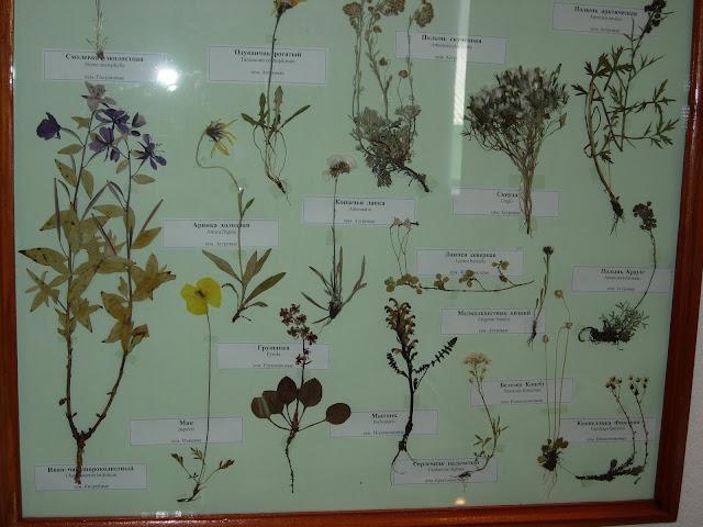 растения чукотки