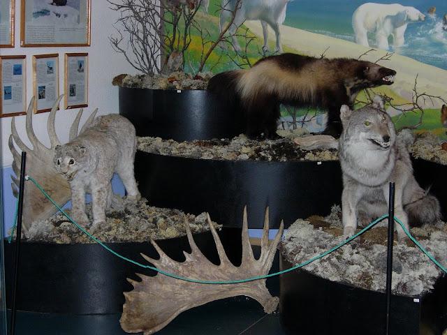 рысь россомаха и волк в музее