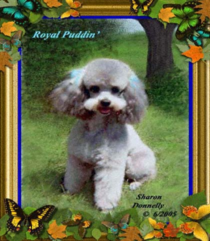 Artsieladie's beloved poodle, Royal Puddin'.
