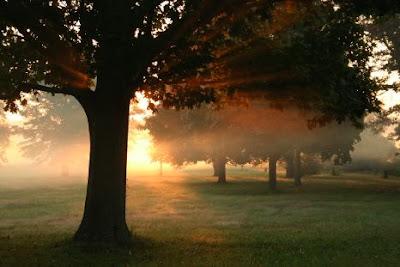 Los beneficios más importantes de los árboles