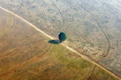 ¿Cuánto oxígeno produce un árbol?