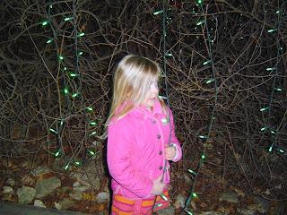 zoo+lights+3 Lights 9