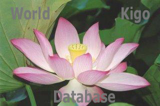 World Kigo Database