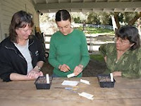 sowing pepper and tomato seeds