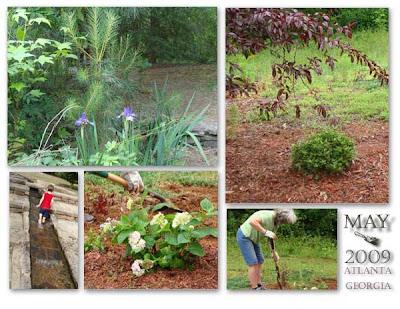 Atlanta gardening
