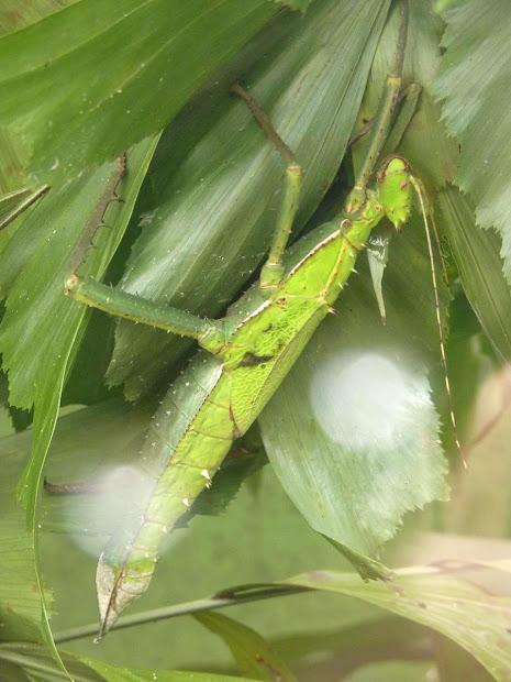 Tastes Of Life Penang Butterfly Farm