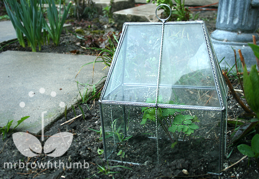How To Make Your Own Garden Cloches To Protect Young Plants