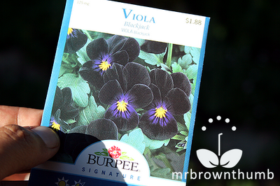 Burpee seed pack viola blackjack, dark flowers, black gardens