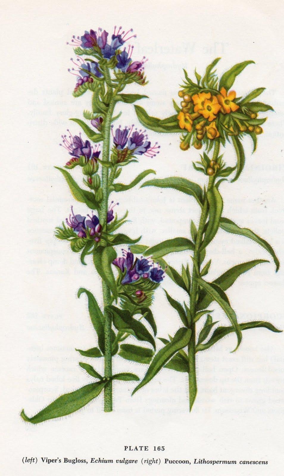 BeeBee.Grace: Antique Botanical Prints