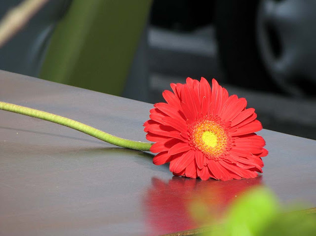 Red flower, table at Le Cristal, Livorno