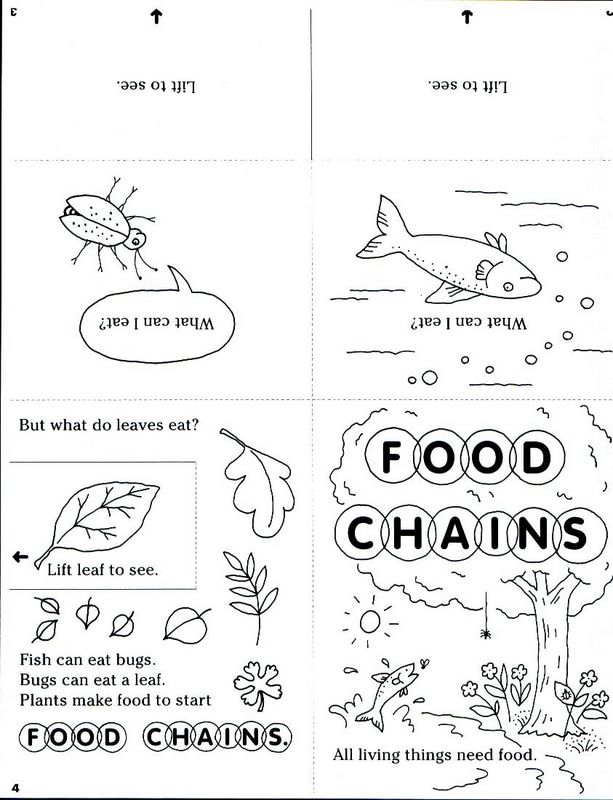 Food Chain Worksheet 1 A. food chain worksheet 1 a