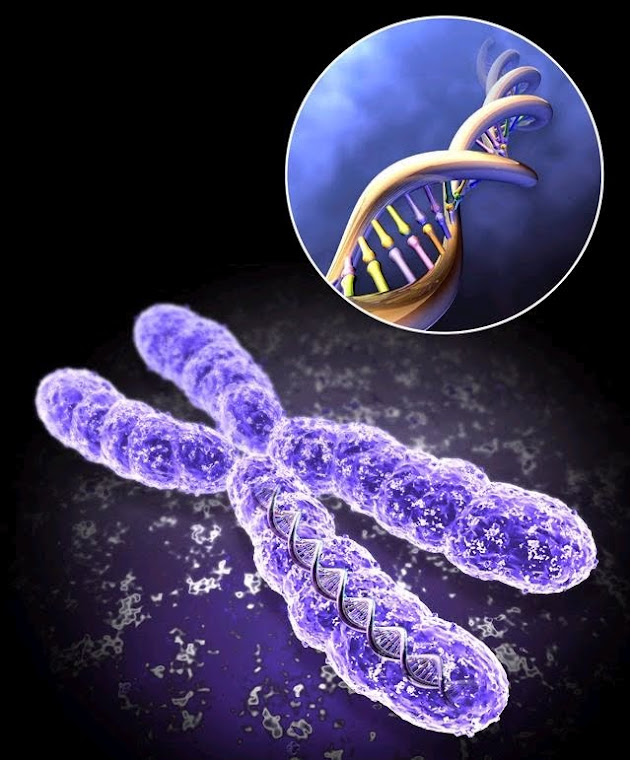 Genetics Project 2010: Who discoverd threacher collins syndrome?