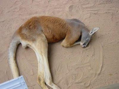 http://4.bp.blogspot.com/_B7iJN32O15U/SKRfFFI1-QI/AAAAAAAAAPM/gUdhtpOtBWk/s400/funny+animals.jpg
