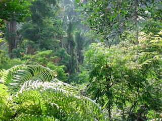 Habrá Museo de Ciencia y Tecnología sobre biodiversidad en Autlán