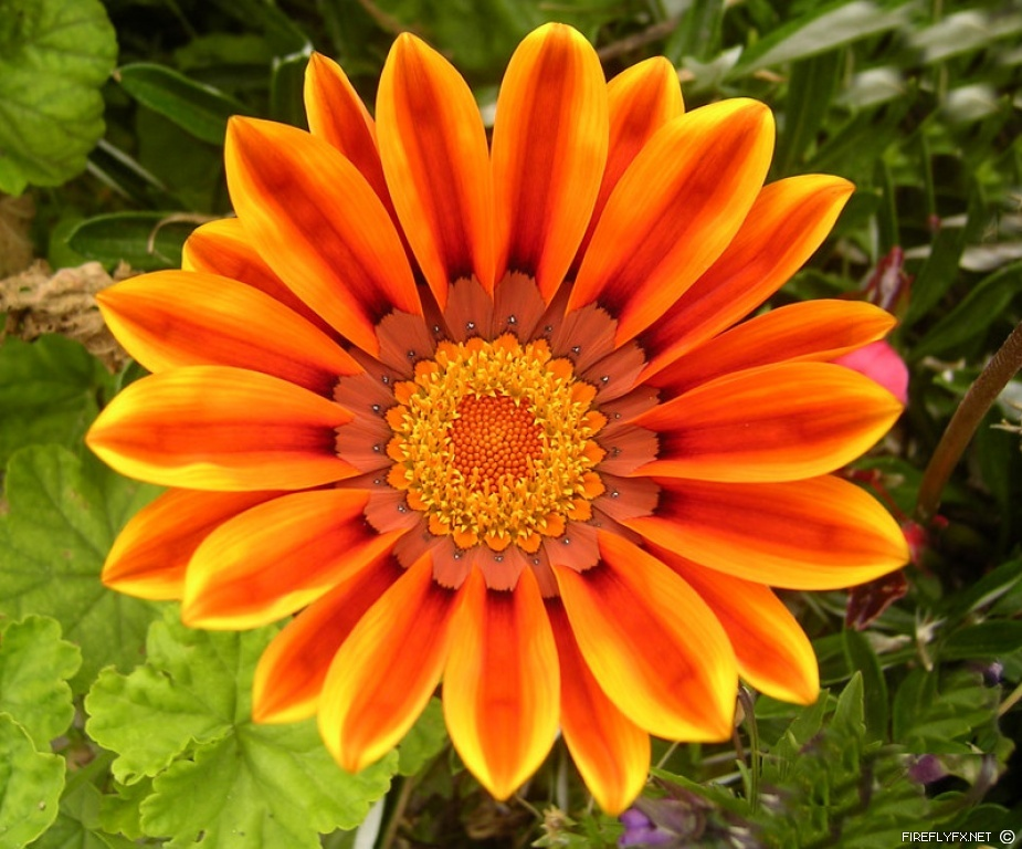 Roses For All Seasons: Dating Relationships and the Orange ...