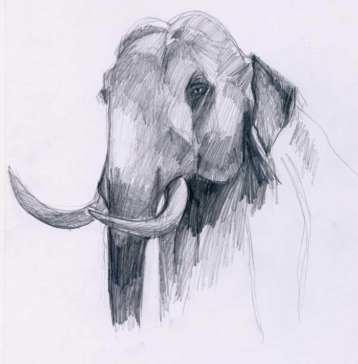 Menggambar Gajah - Belajar Menggambar