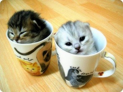 Funny Crazy Animal Photos Kittens In Mugs One With Dog Design Cruel Pic