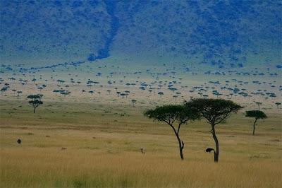sabana africana ecosistemas del mundo