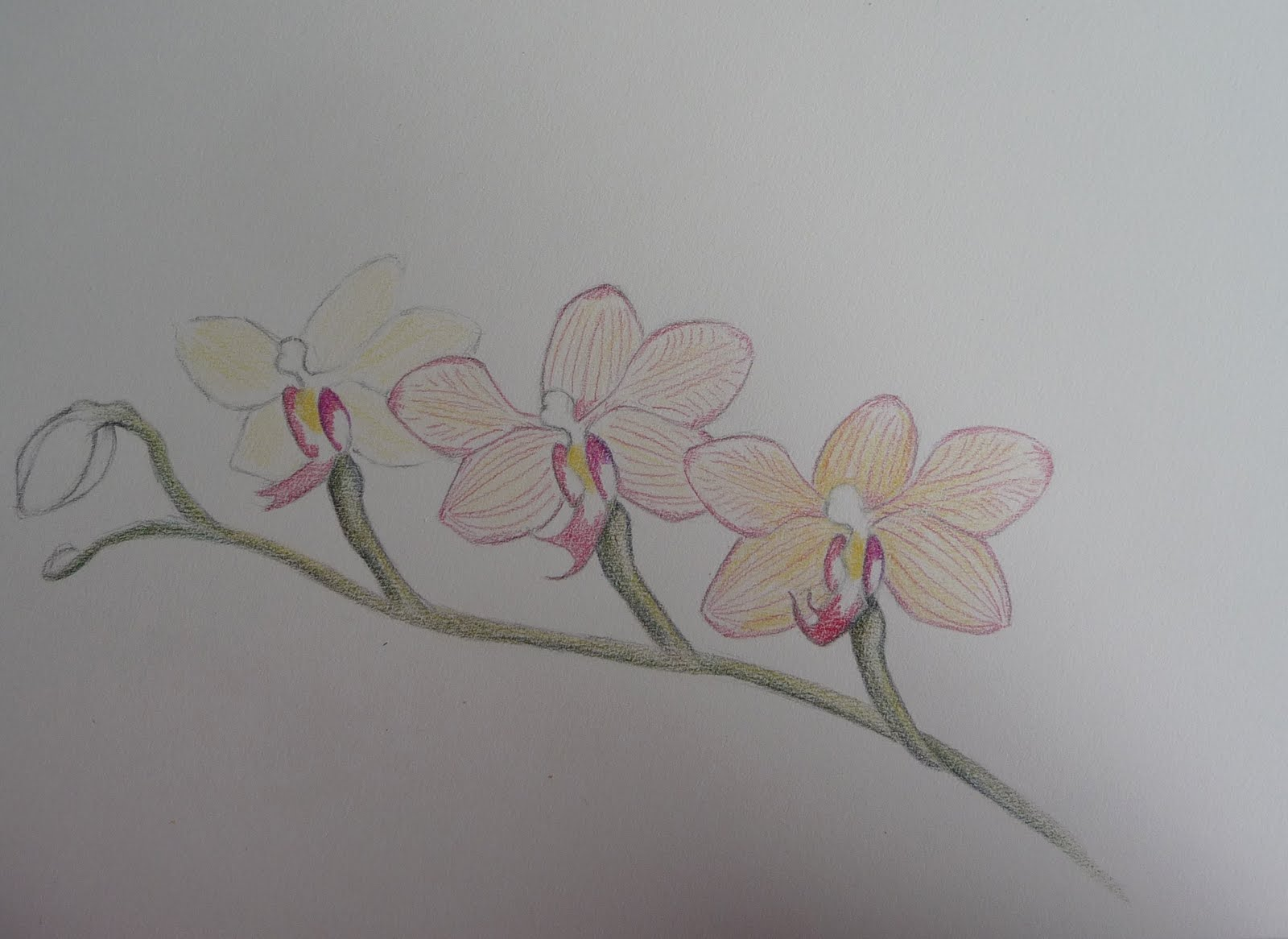 Schilderijen van orchidee n en andere botanische werken orchid ladies - Hoe om kleuren te maken ...
