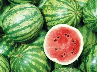 how to grow watermelon, growing watermelon