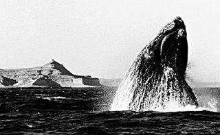 Whale watching  Punta Pirámides - Peninsula Valdes Geography