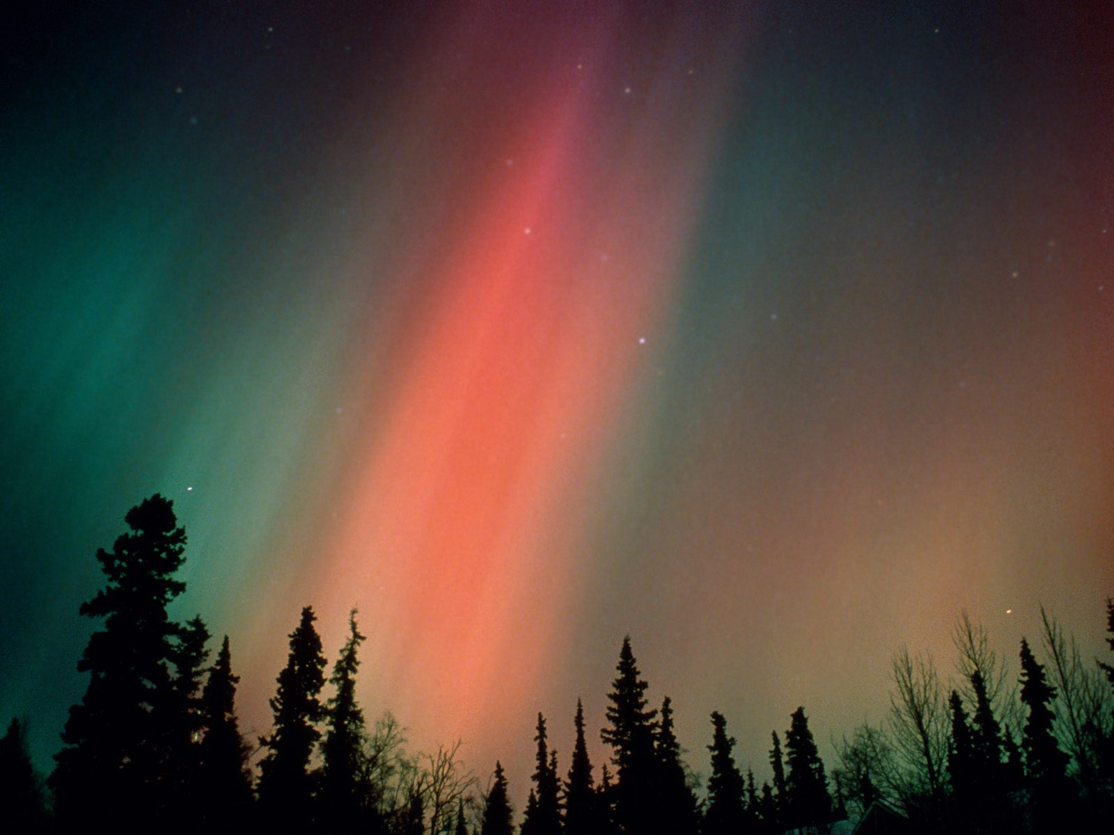 Northern Lights Boreal