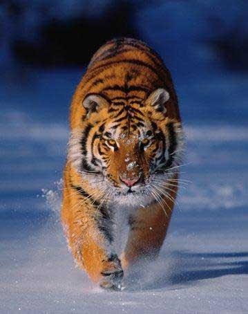 Beautiful Animal Pictures Wallpaper Info Mamiferos Y Otros Seres Vivos Los Tres Principales