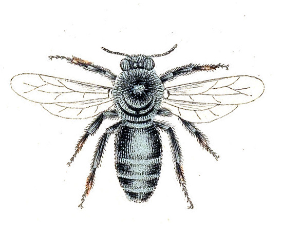 vintage bee clip art - photo #38