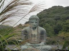 鎌倉大仏・ススキ