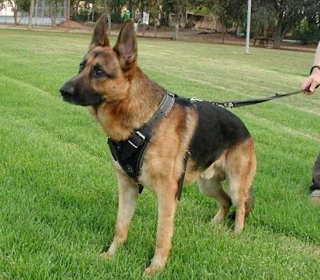 German Shepherd Supplies German Shepherd Dog Body Harness