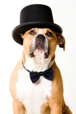 Rosie S Dog Grooming Alresford