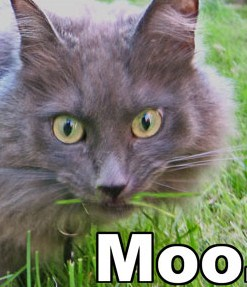 Boo hoo to you, no new MOU - The IPKat