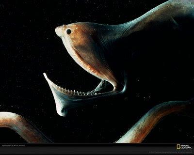 pez pelícano