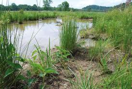 World Wetlands Day (WWD)