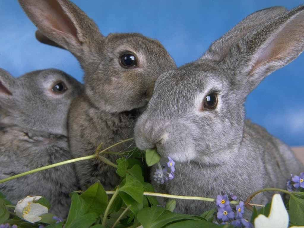 My Rabbit What Do Baby Rabbits Eat A Guide To Raising A