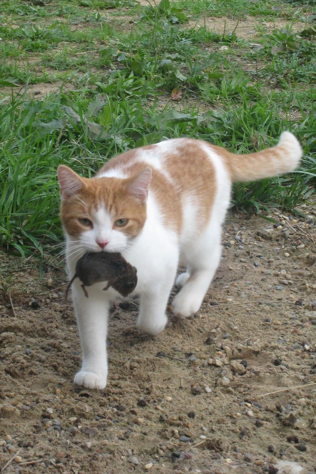 Barn Cat Cat Cat 1