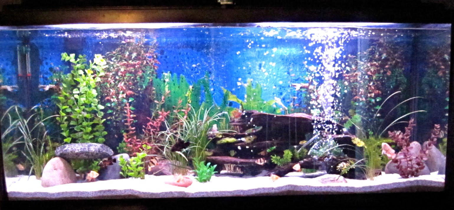 Pretty Freshwater Fish 10 Gallon Tank Images & Pictures   Becuo