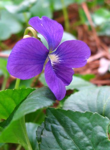 V Is For Violet Jenny Matlock: ...