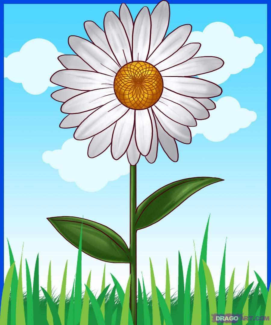 Картинки цветов ромашки для детей, днем рождения