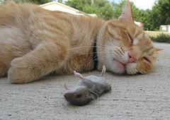 [dead+mouse.jpg]