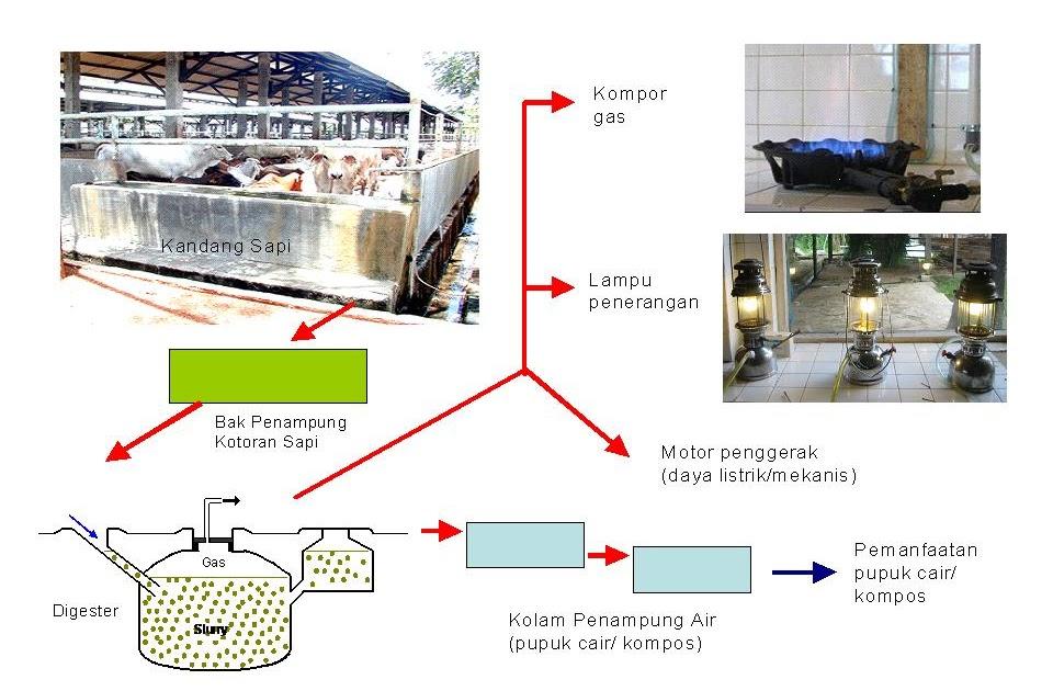 Kalimantan Kita Pencemaran Akibat Limbah Peternakan Dan Penanganannya