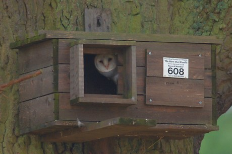 Barn Owl Boxes Plans | Barn Plans Images - Frompo